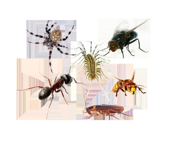 6 Pests