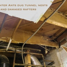 Wooden Structure damaged by Carpenter Ants