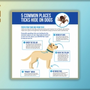 5 Common Places Ticks Hide on Dogs.